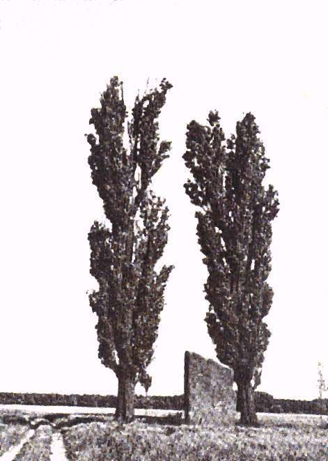 pierre brunehaut